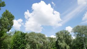 Trees on the background of the sky with clouds stock video footage