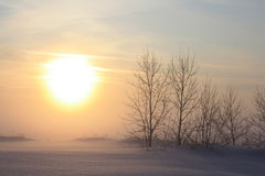 Trees on a background of the sunset. Sunset in the cold winter evening Stock Images