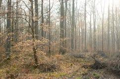 Trees backlight Royalty Free Stock Image