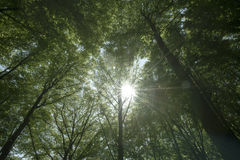 Trees with backlight sun. Trees in the noon backlight sun royalty free stock photo