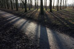 Free Trees Backlit With Strong Long Shadows Royalty Free Stock Photo - 105373255
