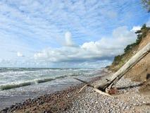 Trees and Baltic sea coast sunny day, Lithuania royalty free stock photos