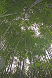 Trees bamboo Stock Photo