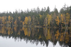 Trees on the bank of lake in the autumn Royalty Free Stock Photos