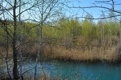 Trees on the bank of the lake. Spring scene. Blue water, dry yellow reeds and light green foliage.  royalty free stock photo
