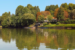 Trees on the bank of Po river in Turin, Italy. Stock Photography