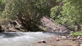 Trees on the bank of rapid river. Pamir, Tajikist stock footage