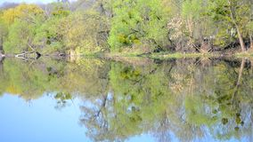 Trees on bank and reflection in the water, spring. Foliar trees on the bank and their reflection in the water in spring on a sunny day with blue sky stock video footage