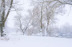 Trees on the bank of the river. In snowfall stock images