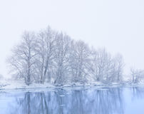 Trees on the bank of the river. In snowfall stock photos