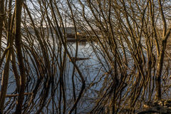 Trees at the banks of Loch Lomond Royalty Free Stock Photos
