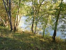 Trees on the banks of the river. With fallen leaves of diferentes colors royalty free stock image