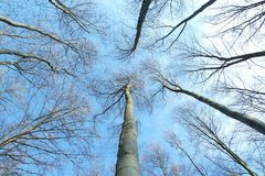 Trees #1 Royalty Free Stock Photos