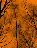 Trees and bare branches. On orange  sky background Royalty Free Stock Image