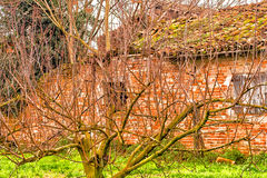 Trees with bare branches in front of country house in ruins Stock Photography