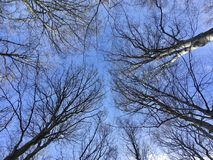 Trees with bare branches Stock Photography