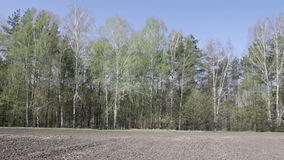 Trees barely covered with young leaves. Gently swaying for chernozem field stock video footage