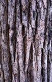 Trees bark Royalty Free Stock Photo