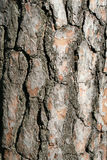 A trees bark - vertical Stock Photo