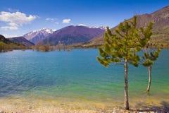 Trees on the Barrea lake Royalty Free Stock Image
