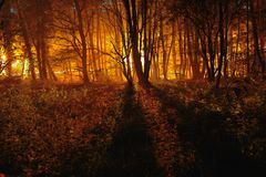 Trees bathing in Artificial lights. In the Early misty morning Stock Photos