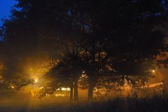 Trees bathing in Artificial lights. In the Early misty morning Royalty Free Stock Photo