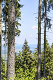 Trees in Bavaria Alps Royalty Free Stock Images