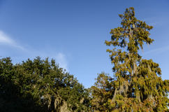 Trees of the Bayou Royalty Free Stock Photography