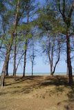 Trees by the Beach. View of trees by the beach at Tanjung Sepat, Penor in Pekan, Pahang, Malaysia Royalty Free Stock Photos
