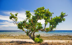 Trees on the beach Stock Photography