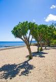 Trees on the beach Stock Photos