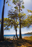 Trees on the beach Royalty Free Stock Images