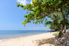 Trees on the beach. The beach with blue sky and trees royalty free stock photo