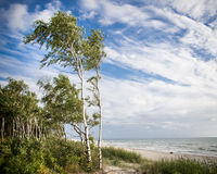 Trees on the beach Stock Image