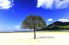 Trees on  beach blue sky summer thailand Royalty Free Stock Image