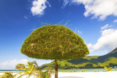 Trees, beach and mountains Royalty Free Stock Photos