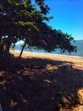 Trees beach ocean sky blue. From a walk down Trinity beach in Australia Royalty Free Stock Photography