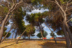 Trees on the beach Royalty Free Stock Photo