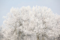 Trees in beatufiul hoarfrost Royalty Free Stock Images