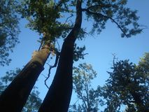 Trees in a beautiful harmony Royalty Free Stock Photo
