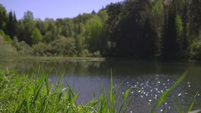 Among trees the beautiful lake was located stock footage