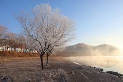 the trees with beautiful rime and fog by the river in jilin, China royalty free stock image