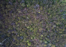 Trees becoming green in early spring, aerial shot Royalty Free Stock Image