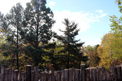 Trees Behind the Wooden Fence. Trees and more trees grow behind the wooden fence made of branches Royalty Free Stock Image