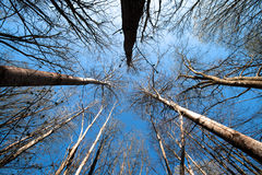 Trees from below Royalty Free Stock Photography