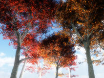 Trees From Below 3 Royalty Free Stock Image