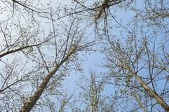 Trees below sky Stock Photos