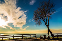 Trees with bench on the sea of Italy Stock Images