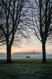 Trees bench table silhouette dawn Stock Image