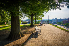 Trees and benches along a path at Federal Hill Park, Baltimore, Royalty Free Stock Images